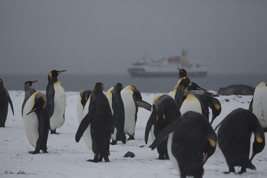 Vårt expeditionsfartyg Ocean Nova sedd från pingvinstrand